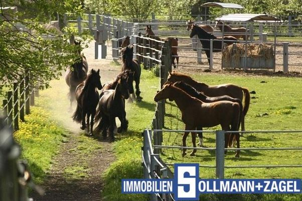 Pferdeparadies PUR!