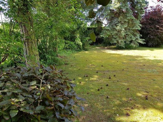 Garten Impressionen 2