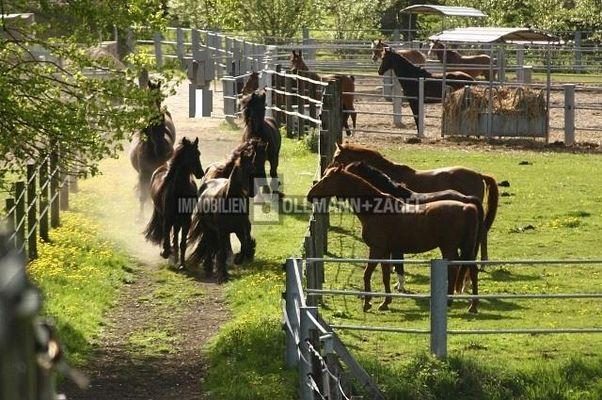 Pferdetreff